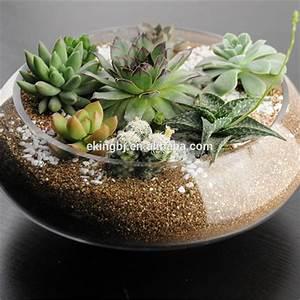 Pflanzen Für Terrarium : terrarium pflanzen glas sch ssel ml202 schale produkt id 60173279394 ~ Orissabook.com Haus und Dekorationen