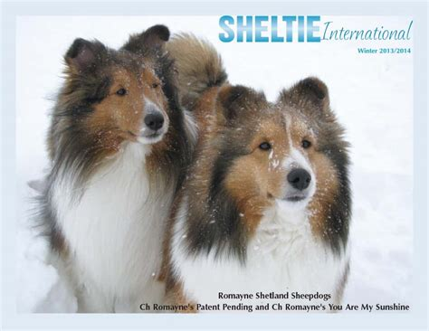 sheltie shedding in winter sheltie international magazine