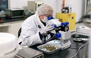 Why Medical Marijuana Research Is Gaining Support From the ...
