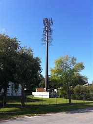Cell Phone Tower Tree