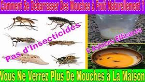 Insecticide Naturel Pour La Maison : comment se d barrasser des mouches fruit naturellement vous ne verrez plus de mouches la ~ Nature-et-papiers.com Idées de Décoration
