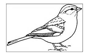 The Florida State Bird Colouring Pages Page 2
