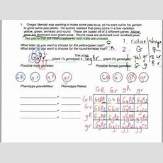 Key For Dihybrid Practice 1 Youtube