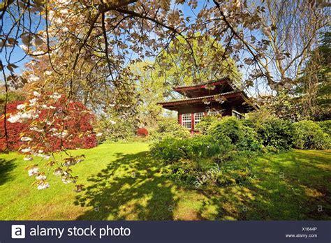 Japanischer Garten Leverkusen Teehaus by Japanische Azalee Stock Photos Japanische Azalee Stock