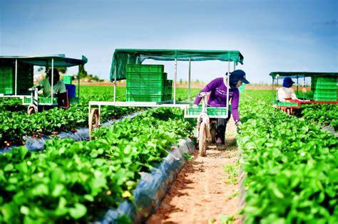 เกษตรไทย | Foundation for agricultural and environmental conservation (Thailand)