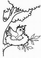 Nest Coloring Bird Pages Robin Birds Printable Jump Want Baby Drawing Nests Bestcoloringpagesforkids Getdrawings Robins Place Animal sketch template