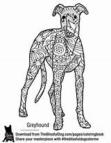 Greyhound Coloring Printable Pip Italian Colouring Woezel Kleurplaten Adult Sheet Template Whippet Books Drawing Breeds Sheets Sketch Below sketch template