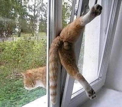warum ist es  wichtig fenster und balkone katzensicher