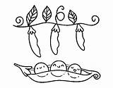 Peas Coloring Pages Coloringcrew Pumpkin Dibujo Template sketch template