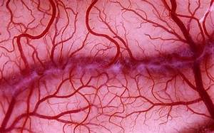 Artificial Blood Vessels Grown From Stem Cells