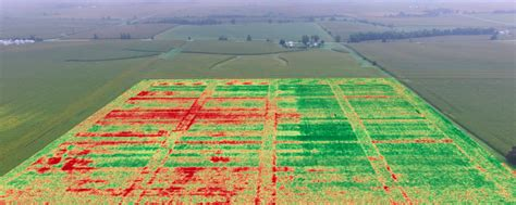 drone map shows improved standability  corn crop