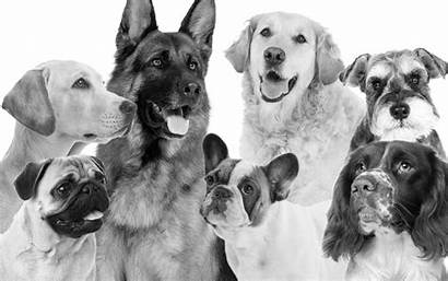 Pets Caring Steps Simple Five Pet Dogs