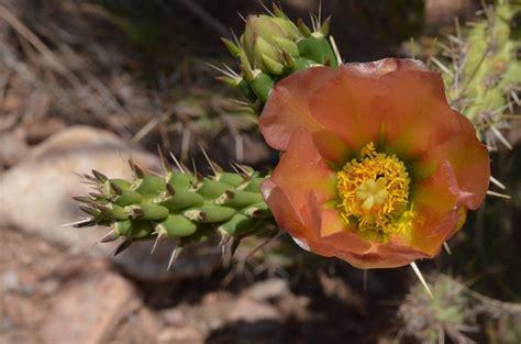 administration native plant society   mexico
