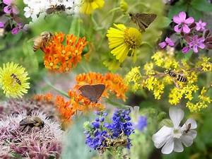 18 Best Pollinators Images On Pinterest