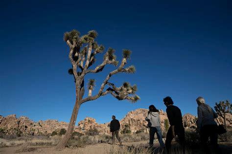 Joshua Tree National Park Battles Vandalism During