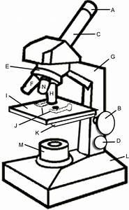 halsceso microscope parts worksheet kids With magneticfieldsensorpcbsilk electronicslab