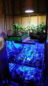 Led Grow Erfahrung : pflanzenlicht led hat da jemand schon erfahrung samen anzucht vermehrung green24 hilfe ~ Watch28wear.com Haus und Dekorationen