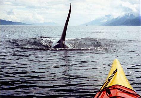 Five Day San Juan Island Kayak Expeditions