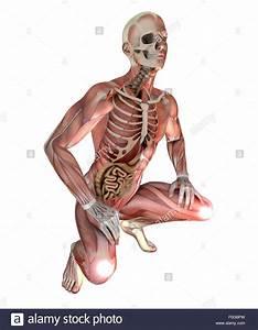 Male Body Organs Diagram