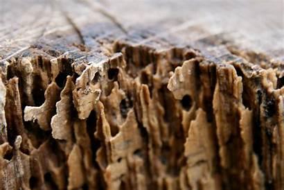 Termites Signs Termite Wood Damage Rayap Pembasmi