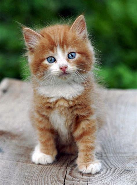 les 25 meilleures id 233 es de la cat 233 gorie beaux chats sur