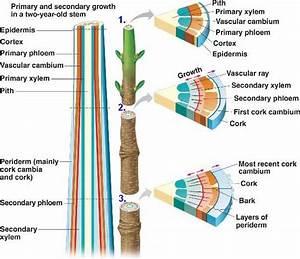 Botany Mideterm Lab Practical  Labs 1-5