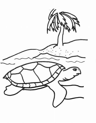 Turtle Coloring Sea Pages Printable