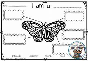 Butterflies  A Butterfly  U0026 Caterpillar Non