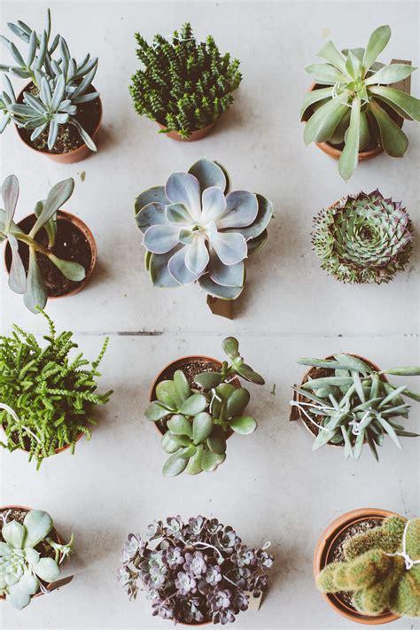 types of succulents top 5 succulent planter types botanical deer