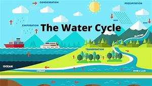 Water Cycle Diagram In 2020