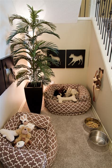 rooms dogs dream