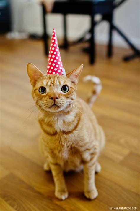 cat birthday birthday party cat cute cats in hats