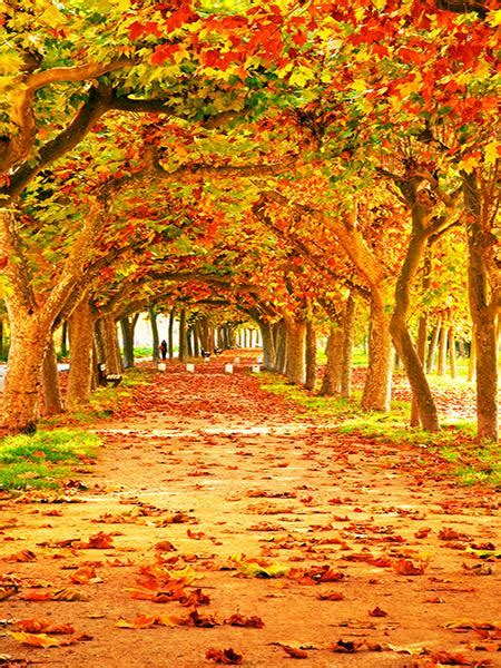 Tree Photo Backdrop by Kate Autumn Tree Fall Leaves Scenic Photo