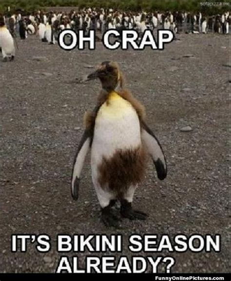 Funny Meme Captions - 196 best images about cute animal memes on pinterest bad pun dog funny and funny meme pictures