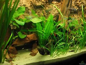 Pflanzen Im Aquarium : example no 2112 from the category west central africa ~ Michelbontemps.com Haus und Dekorationen