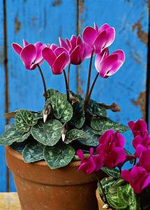 These 5 Simple Tips Will Give Your Indoor Plants Some Tlc