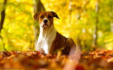 fall wallpaper  dogs wallpapersafari