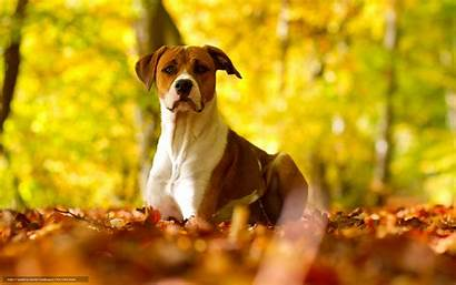 Dog Background Wallpapers Autumn Nature Jungle Dogs