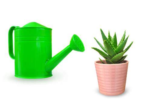 Wie Oft Aloe Vera Gießen aloe vera gie 223 en 187 wie oft wann und wie
