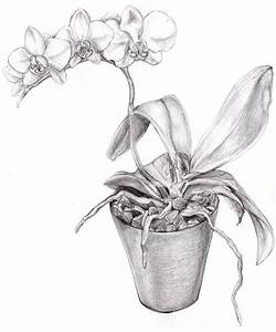 BW Orchid Drawing | Tattoos | Pinterest