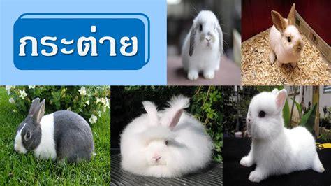 5 สัตว์เลี้ยง ที่คนนิยมนำมาเลี้ยงมากที่สุด   kodjafit ...
