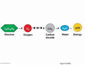 Biology 1114 > George > Flashcards > Chapter 6: Cellular ...