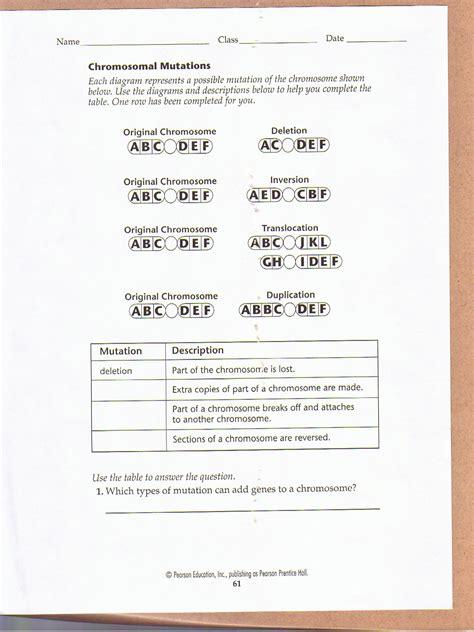 chromosomal mutations worksheet education