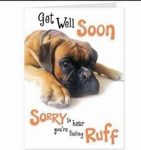 """24 best BOXERS (""""GET WELL"""") CARDS ...... images on ..."""