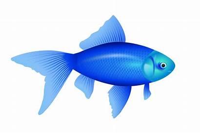 Fish Pngimg