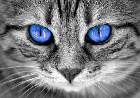 cat colors eyes eye cats facts different why changing happy most animal know there guide such thing