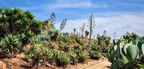 Botanicactus Mallorca Botanischer Garten (bei Ses Salines