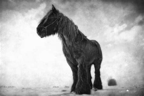 strong horse equus caballus ferus standing horses native photorator van likes american indian