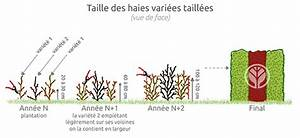 Quand Tailler Les Arbustes De Haies : taille des haies quand crer une haie libre et naturelle ~ Dode.kayakingforconservation.com Idées de Décoration