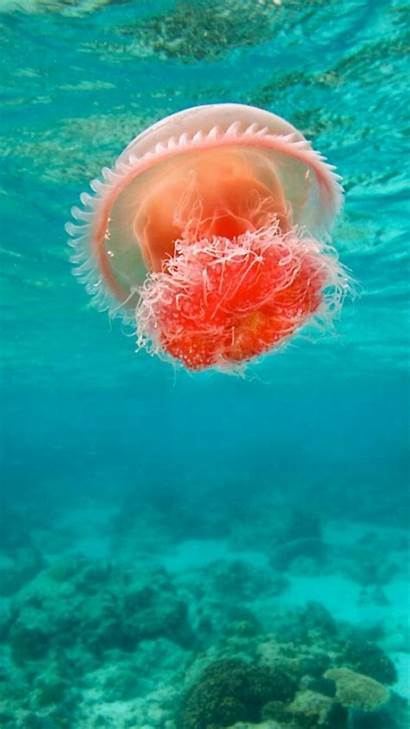 Jellyfish Sea Wallpapers Under Ocean Jelly Underwater